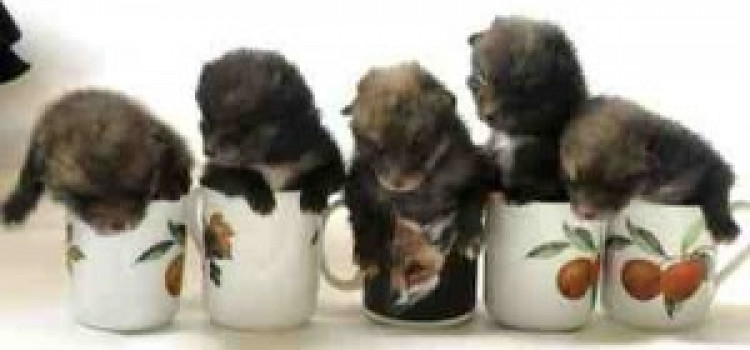 """""""Puppies"""" Found In Stoke Newington Are Fox Cubs"""
