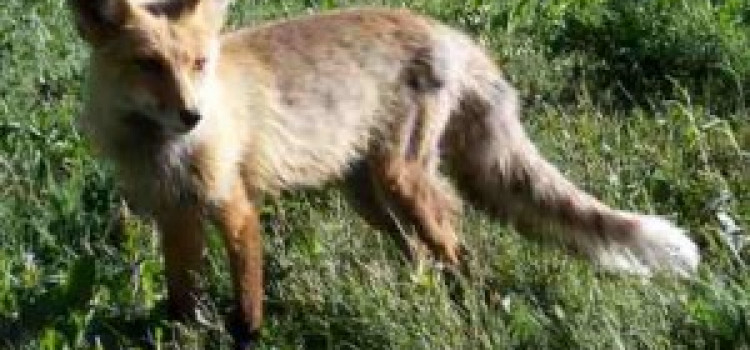 9 month Old South Hackney Twins In Fox Attack