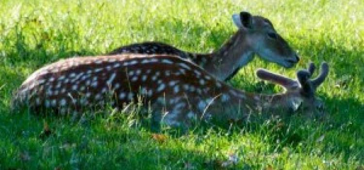 Second deer in one week found dead in Clissold Park