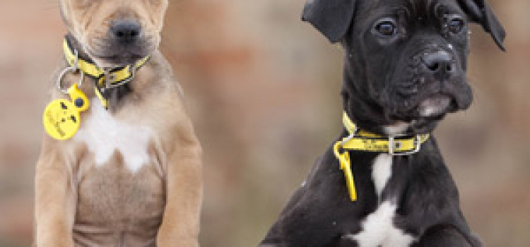 Free Dog event from Dogs Trust in Hackney