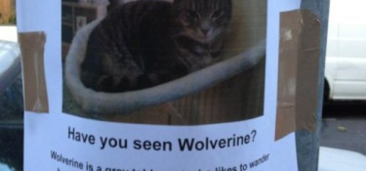 Missing Cat from Stoke Newington: Have you seen Wolfie?