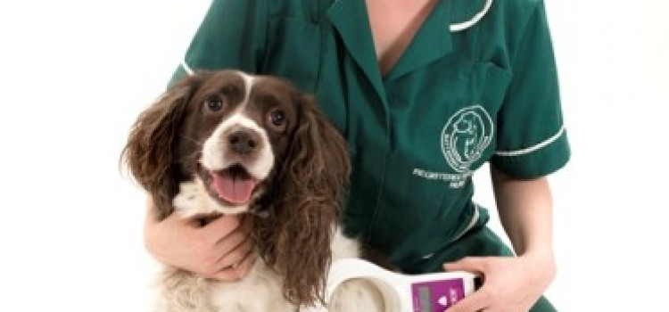 Battersea to microchip dogs for free in Mare Street