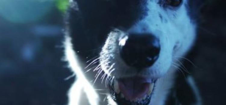 FOUND: Have you seen Ayla, a Border Collie Cross from Clapton?