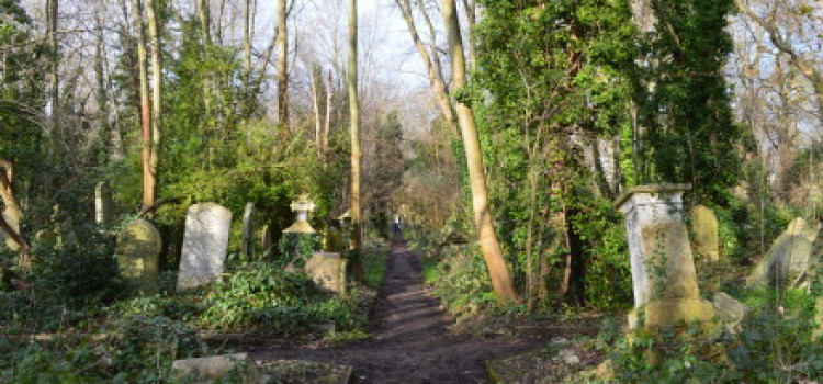 Rape in Abney Park being investigated
