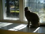 Top Dawgs Pet Sitting
