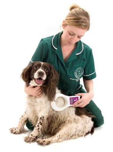 Battersea Dogs & Cats Home microchipping